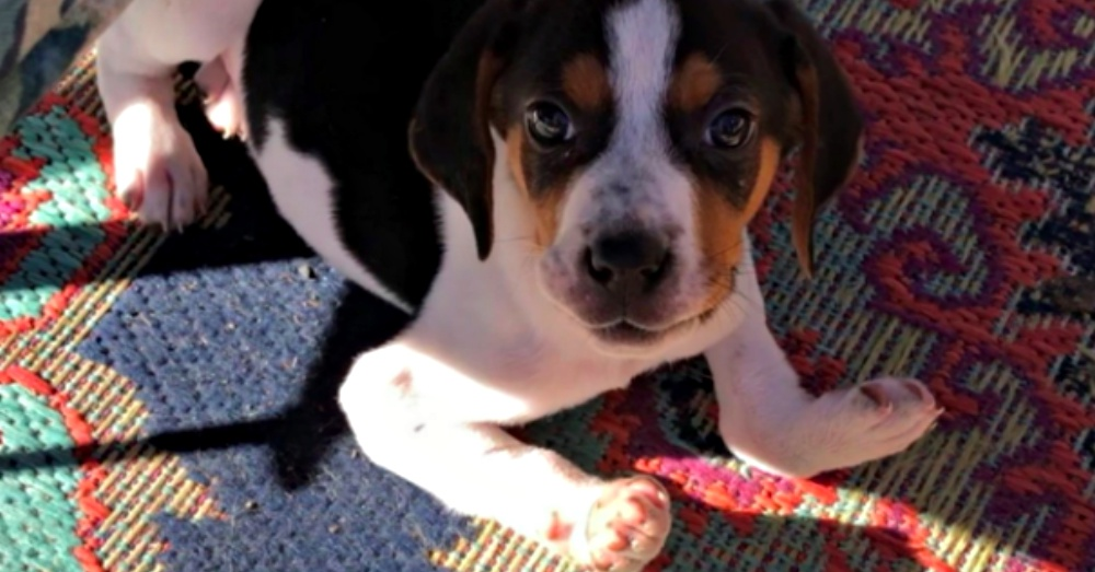 Puppy Born With Upside-Down Paws Defies The Odds By Learning To Walk.