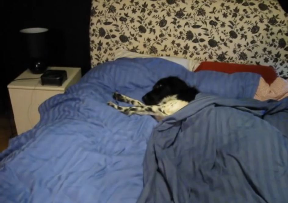 Funny Dog Turns Off Alarm Clock to Start the Day