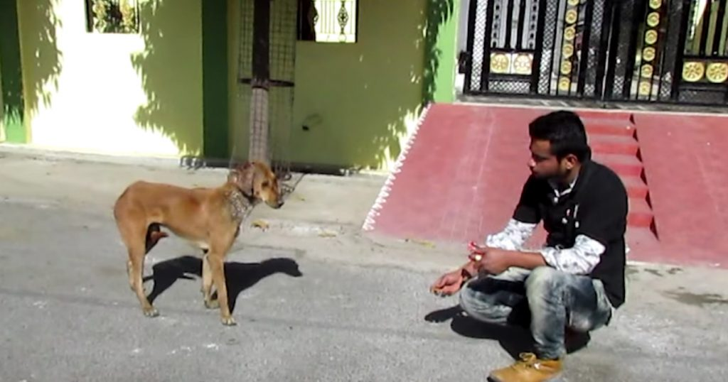 Shy And Injured Stray Dog Allows Rescuers To Approach But Not Touch