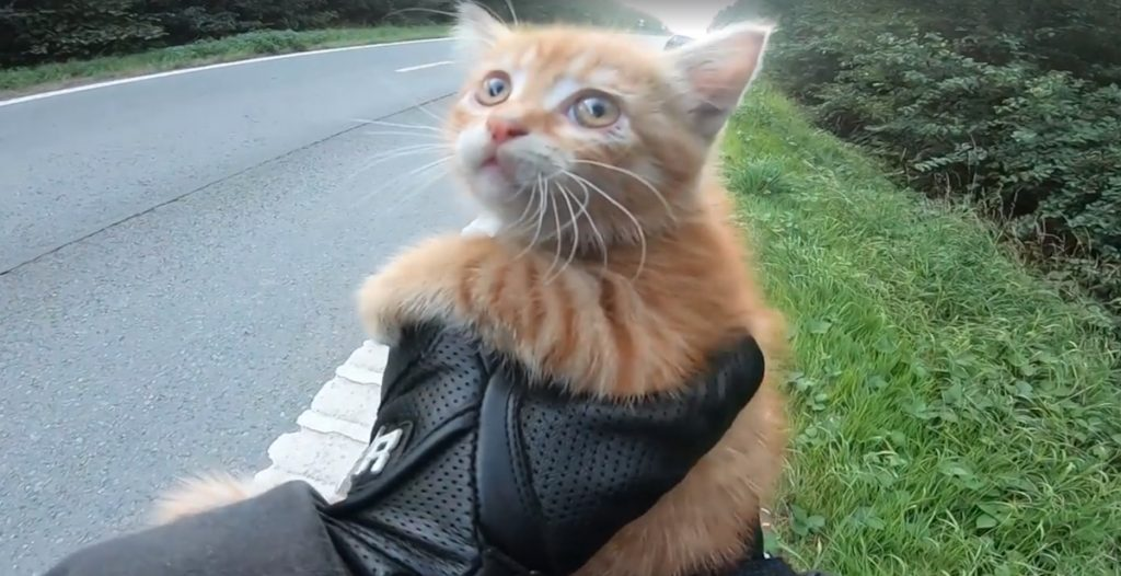 Motorcyclist Sees Tiny Kitten In Middle Of Road, Stops Traffic To Get To Her