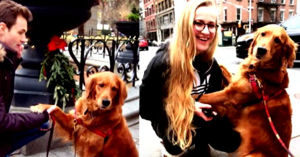 Man's Dog Would Give Hugs To People On The Street, And Now She Works At The Hospital