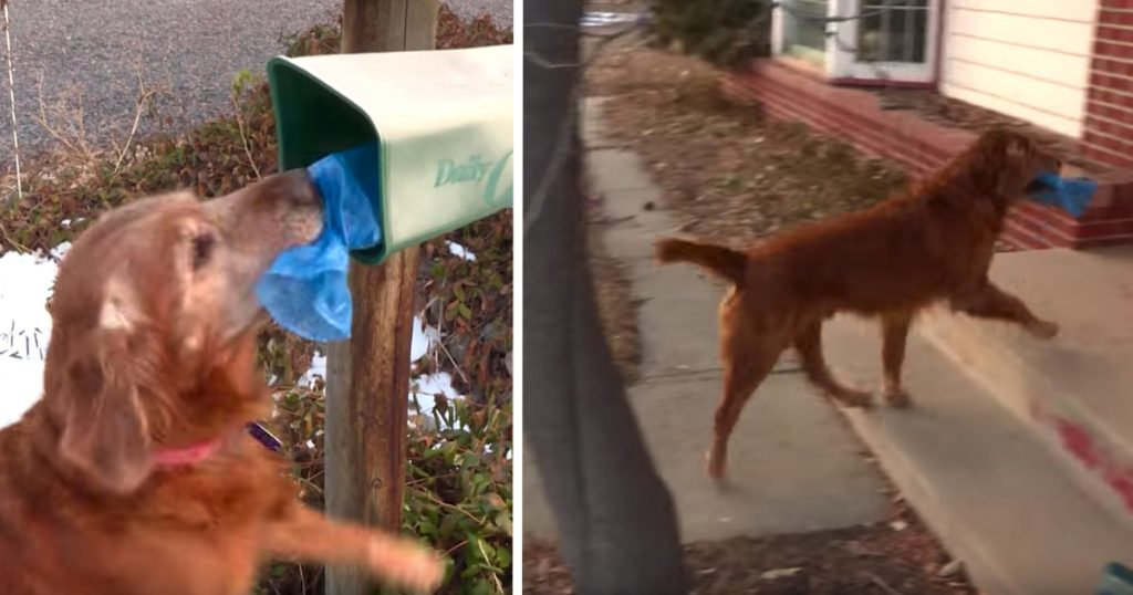 Dog Delivers Neighbors' Newspapers To Their Doors While On His Morning Walk
