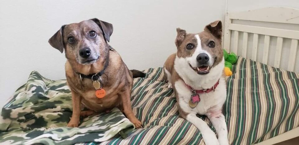 Bonded senior dogs homeless after their owner died