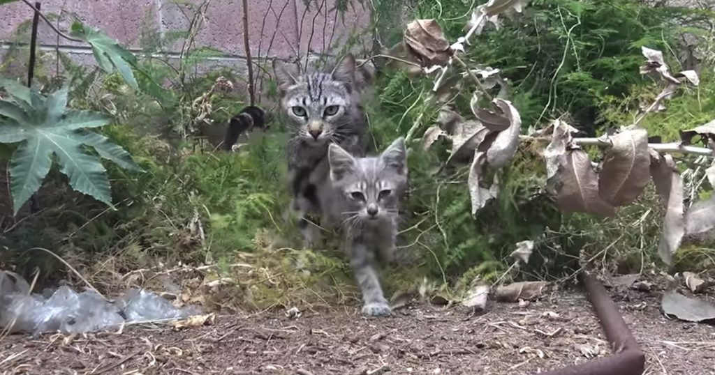Sick Cat Family Found In A Backyard, And Kittens Were Having Trouble Walking