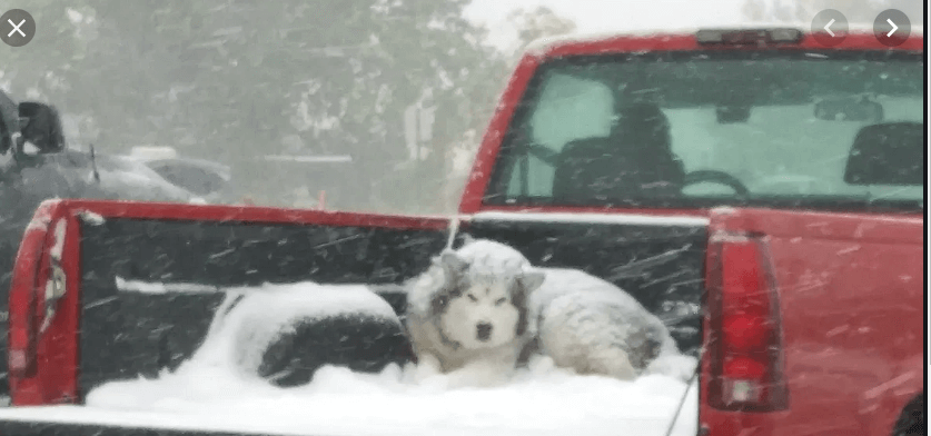 Photo of dog in snow covered pickup truck bed goes viral