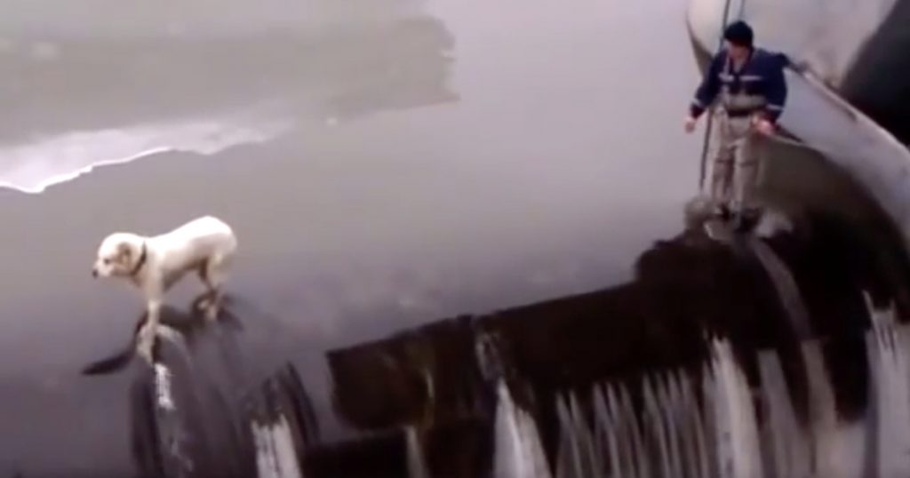 Man Risks It All To Save Dog Trapped On The Edge Of A Dam