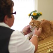 Local Cat Senses When There's A Funeral And Heads Over To Help Mourners Grieve