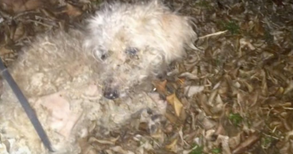 Dog Is Found Tied To A Fence And Left To Die In The Florida Heat
