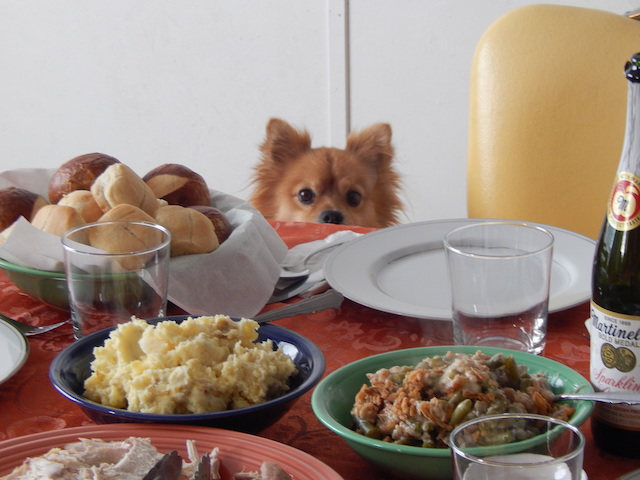 9 Naughty Dogs Who Couldn't Wait For Thanksgiving Dinner