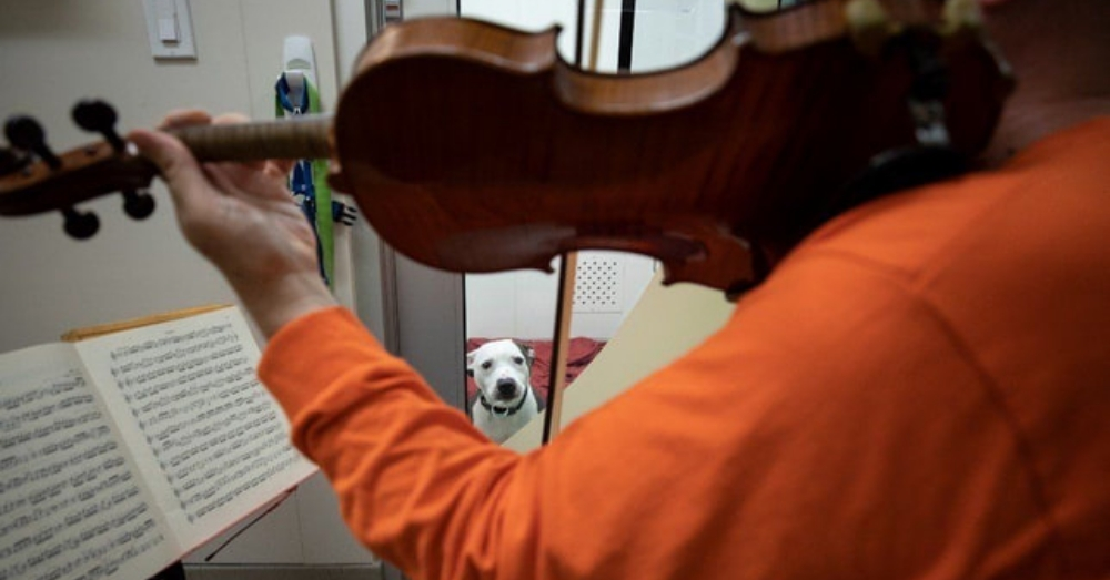 This Professional Violinist Plays Mozart For Abused Shelter Dogs In Between Concerts At Carnegie Hall