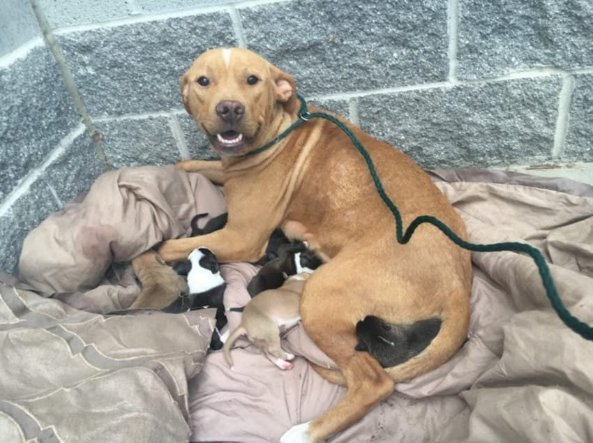 Someone Dumped A Mama Dog Who'd Just Given Birth To 10 Puppies