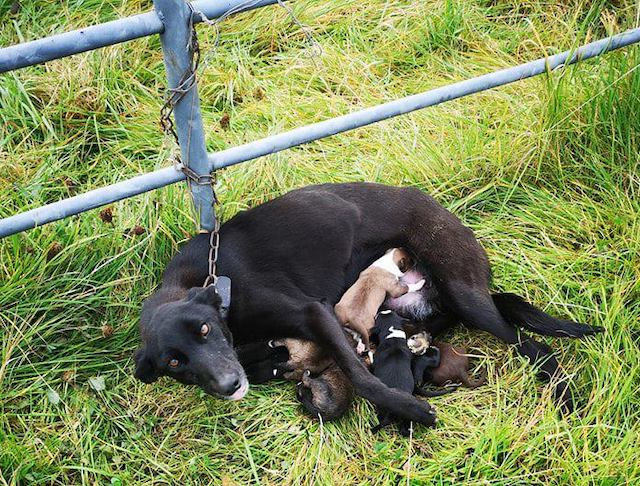 Dog and Her Six Puppies Dumped on Side of Rural Road