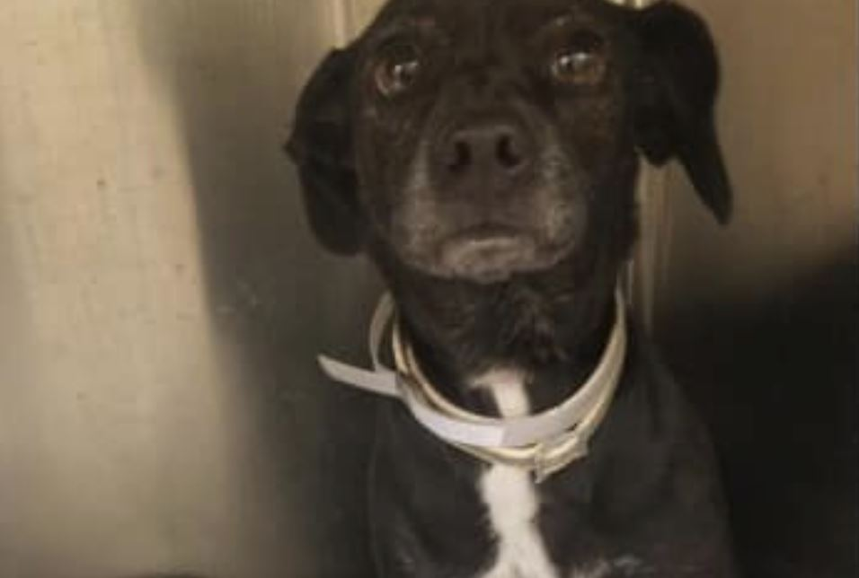 Inconvenient dog dumped at shelter when family made travel plans