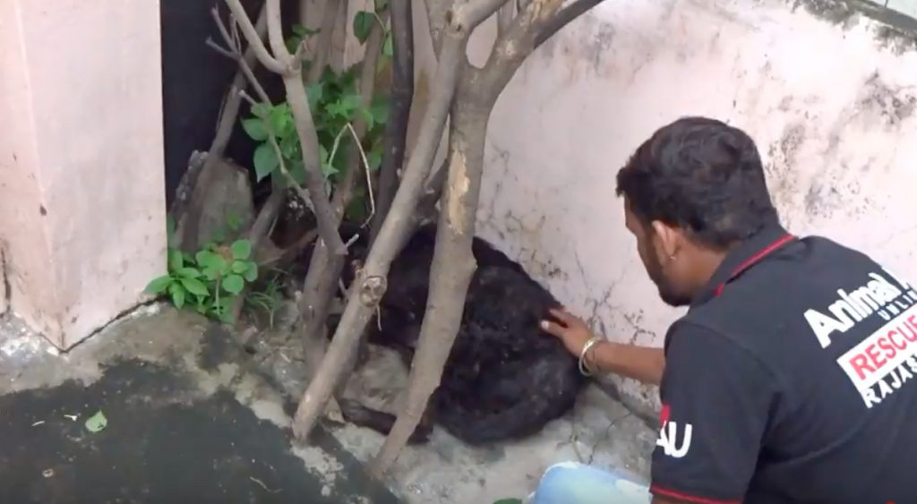 A Stray Dog Had Collapsed In The Street And Couldn't Lift His Head