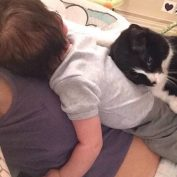 Adopted Cat Waits 9 Months By Mom's Belly For The Baby To Arrive