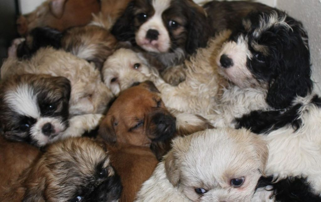 Dozens Of Puppies Found Huddled Up And Confused In Somebody's Trunk
