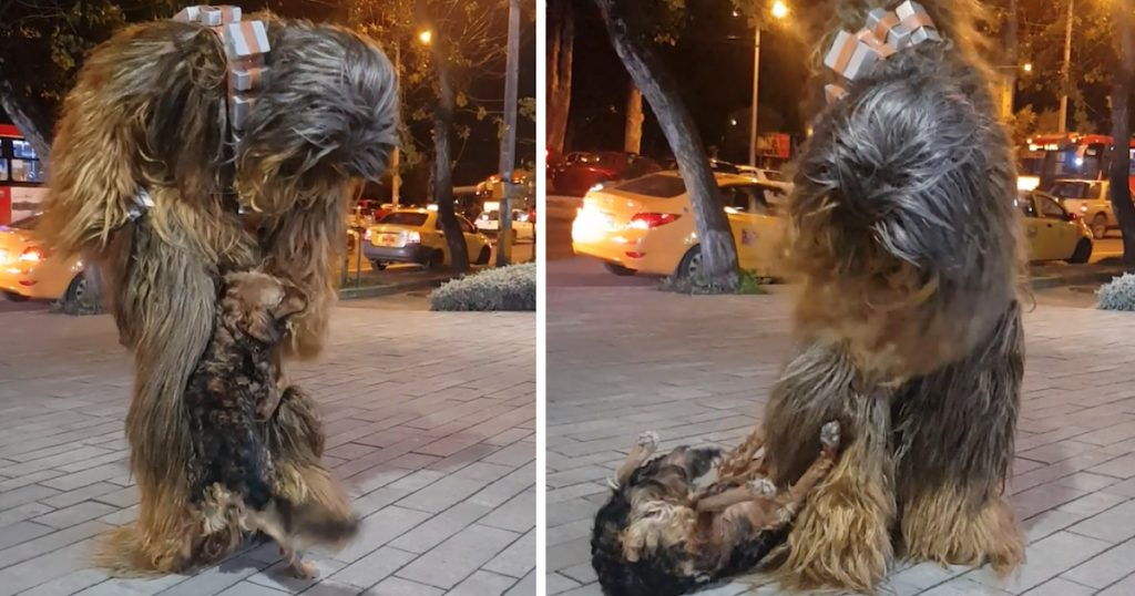 Dog And Chewbacca Observe Their Similarities In Meeting On The Streets