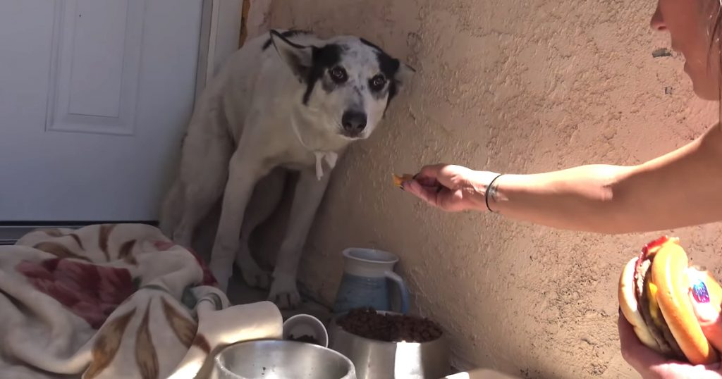 Stray Dog Gives Up Life On The Streets In Exchange For A Cheeseburger