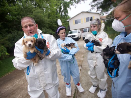 Police Go Look For Loose Dog, Find 276 Small Dogs In Single Family Home