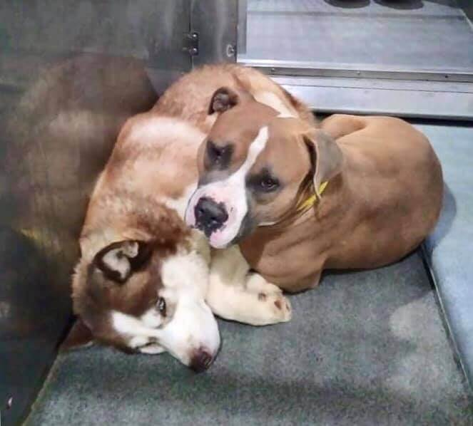 Impounded death row dogs seek comfort from one another