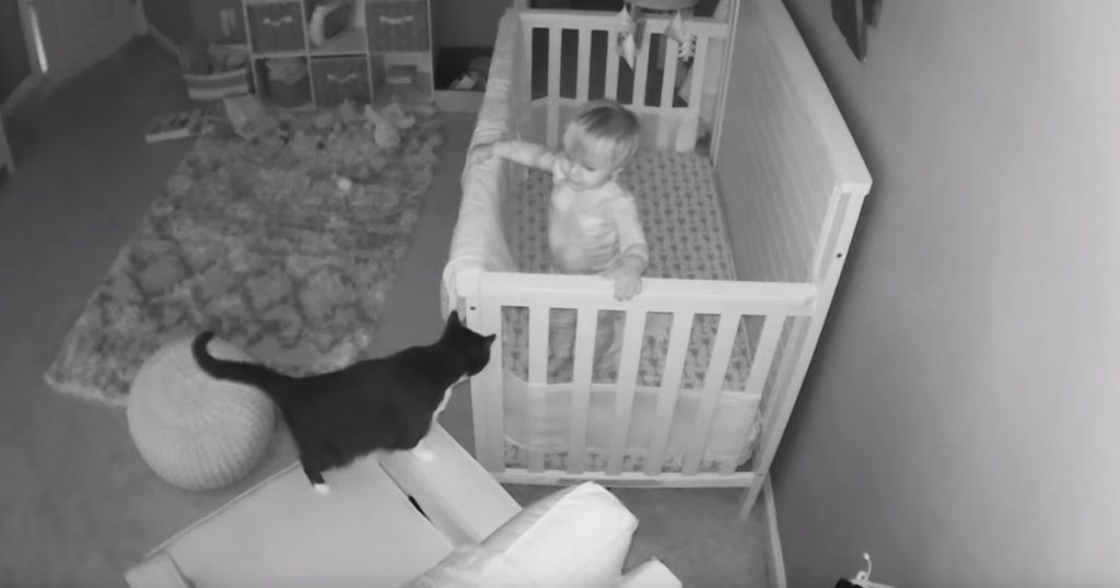 Cat Wanders Into Baby's Room, And A Conversation Ensues From The Crib