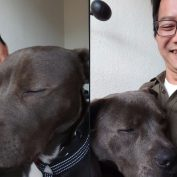 16 Grown-Up Pups Who Insist On Remaining Lap Dogs
