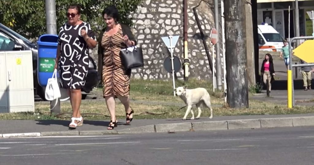 Stray Dog Seen Following Everyone On The Street, And They Ignored Her