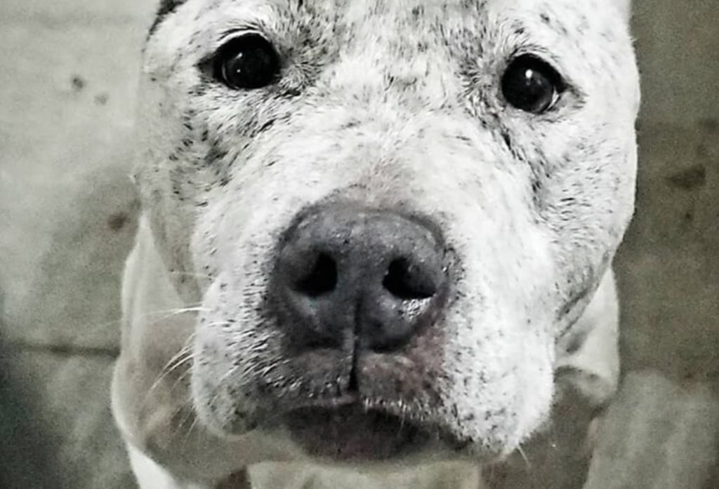 Elderly dog waits for her chance to be saved