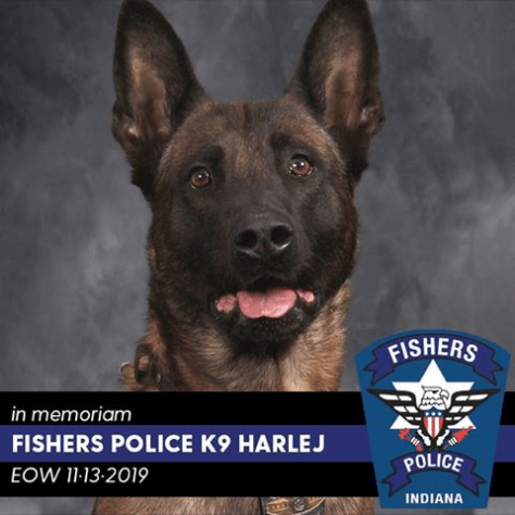 Police K9 killed while tracking suspects