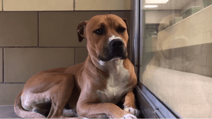 Puppy quivers in fear and confusion inside of loud, busy animal control facility