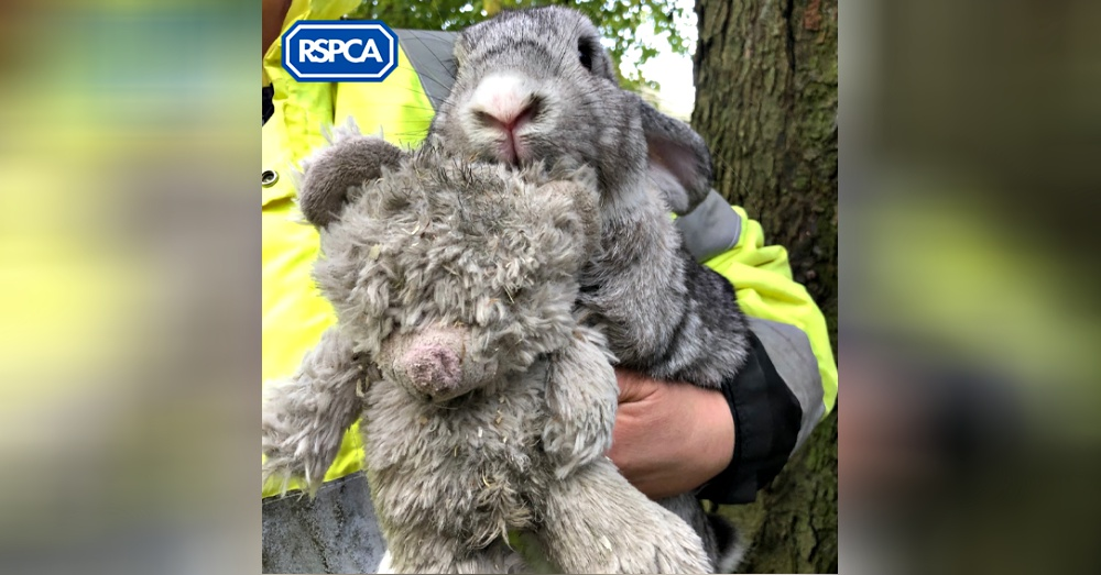 Rabbit Found In A Box On The Side Of The Road Clinging To A Teddy Bear