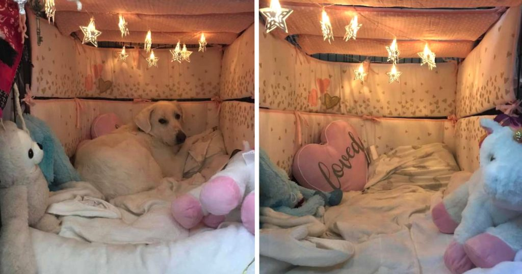 Mom Transforms Dog's Safe Space Crate Into Something A Little More Comfortable