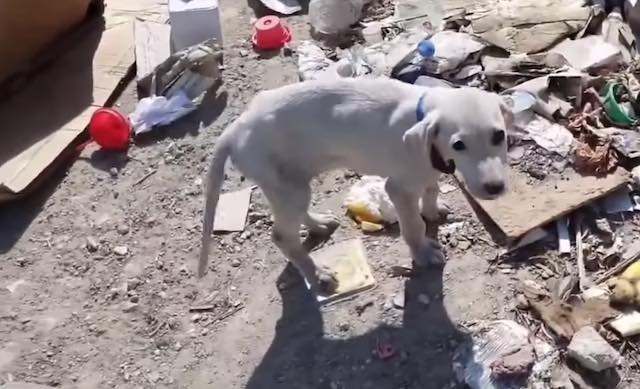Puppy Thrown Out At Garbage Dump Has Best Life Now