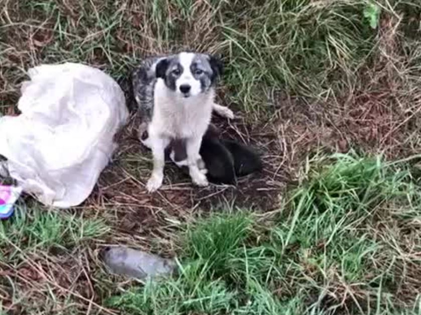 Heroes save dog with her puppies abandoned at side of the road