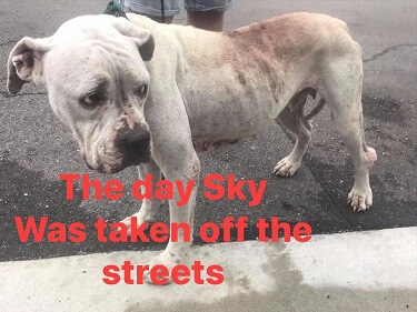 Sky rescued from streets of Fort Lauderdale