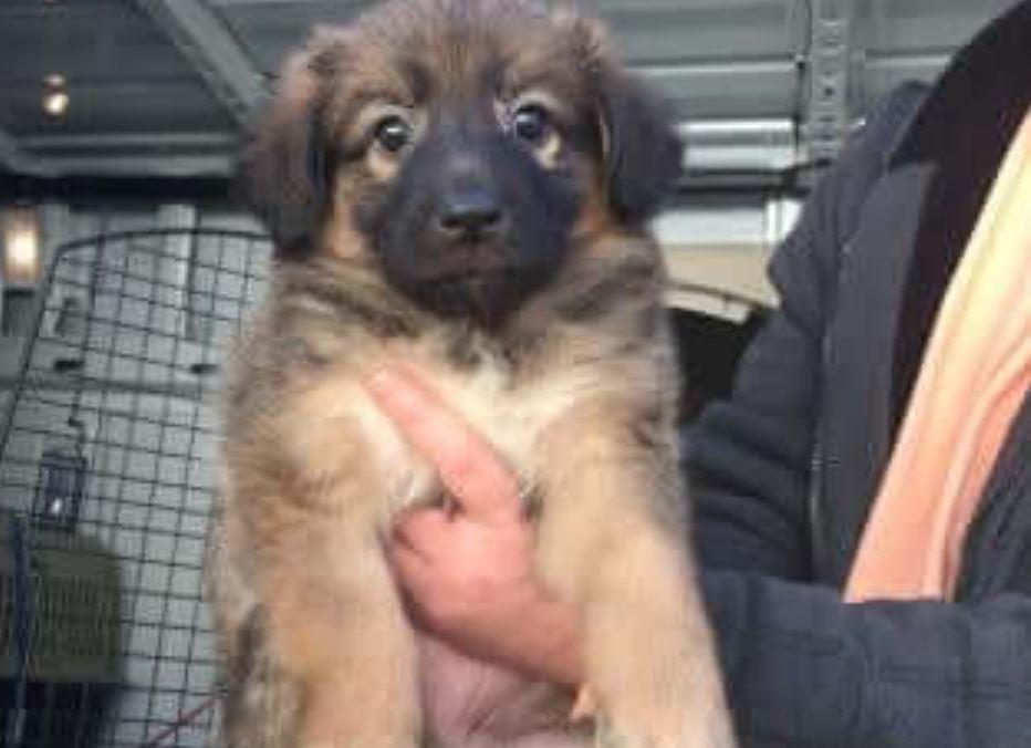 Animal shelter staff implores thief to return stolen puppy
