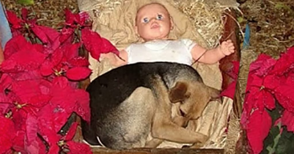 Stray Puppy Takes Refuge In Nativity Scene To Keep Warm During Cold Nights