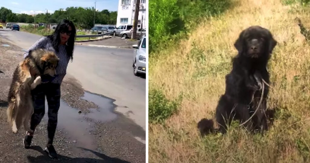 Woman Rescues Stray From The Road, Sees Another In The Field With A Rope