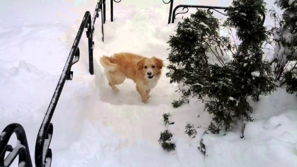 No Such Thing As Too Much Snow for This Funny Dog