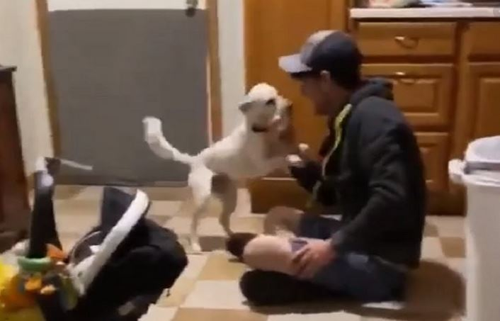 Dog totally lose it when owners come home after week away