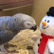 Dancing parrot and snowman have some awesome moves