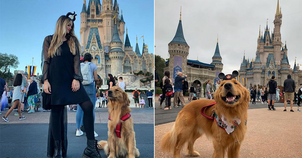 Service Dog Goes Wild Over 'Up' Dog At Disney World