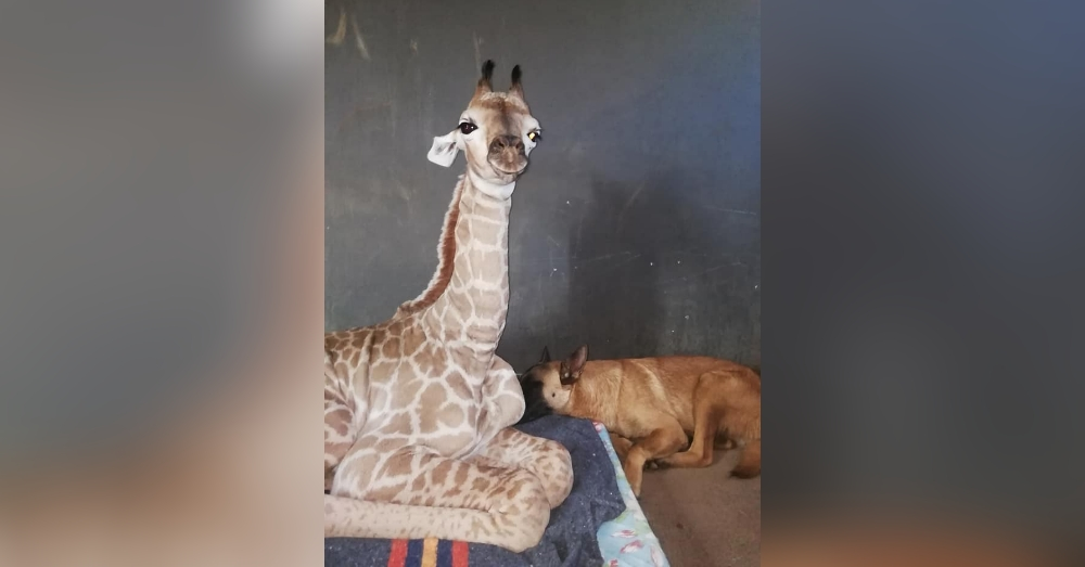 The Internet Swooned When A Dog Befriended A Baby Giraffe. Now 1/2 Of The World's Cutest Odd Couple Has Suddenly Died