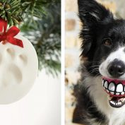 The Best Gifts You Can Buy For Your Dog For Christmas
