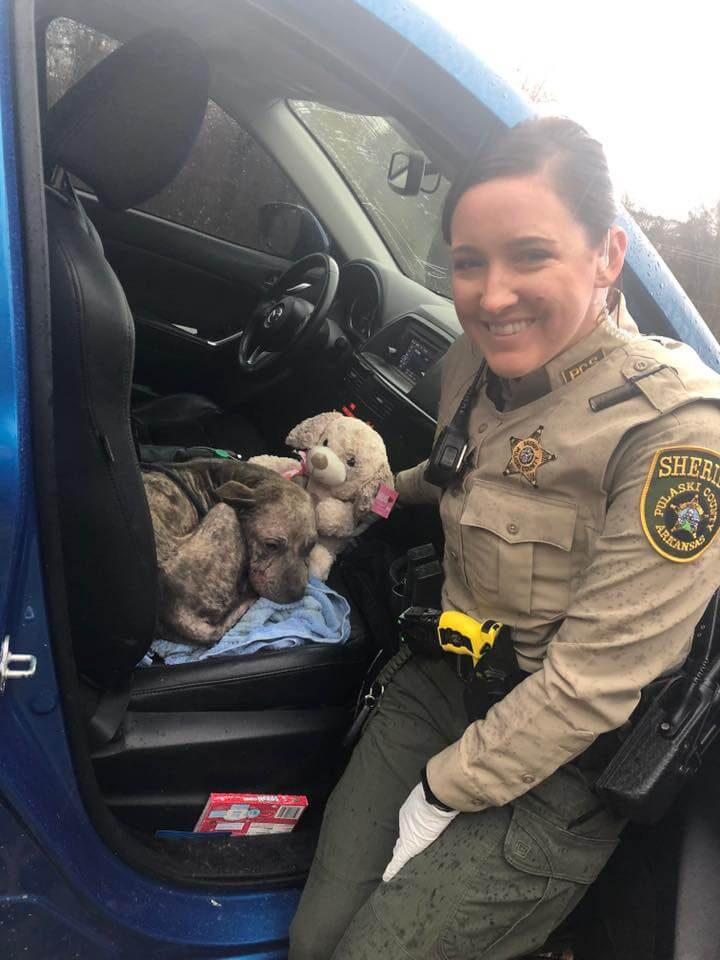 Deputies find and save ailing stray dog on Thanksgiving day