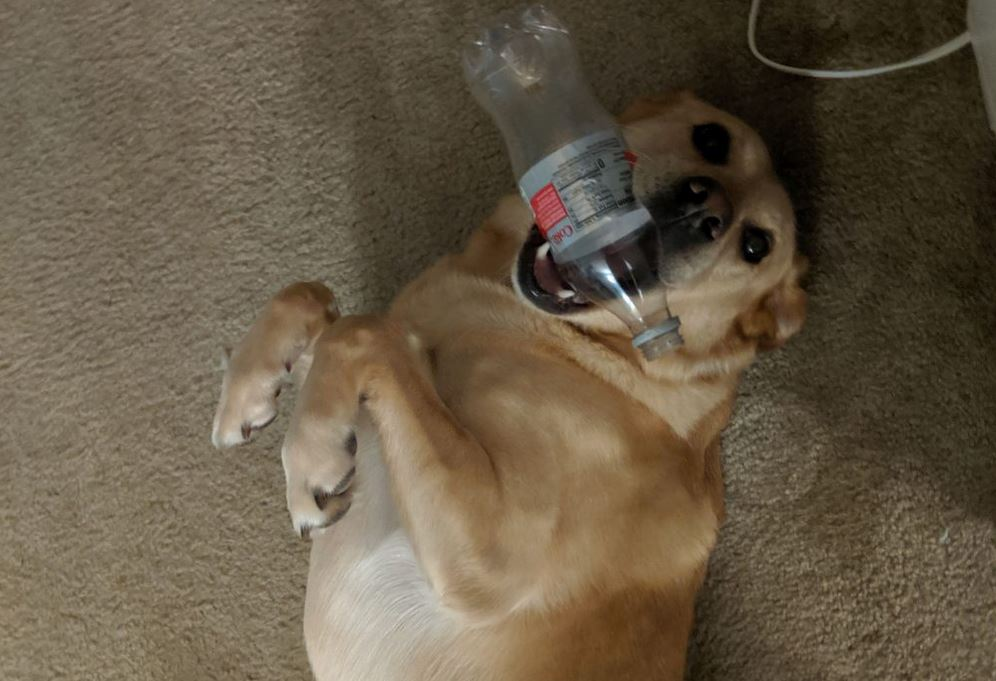 Dog Always Brings His Owner Random Gifts Every Time She Comes Home