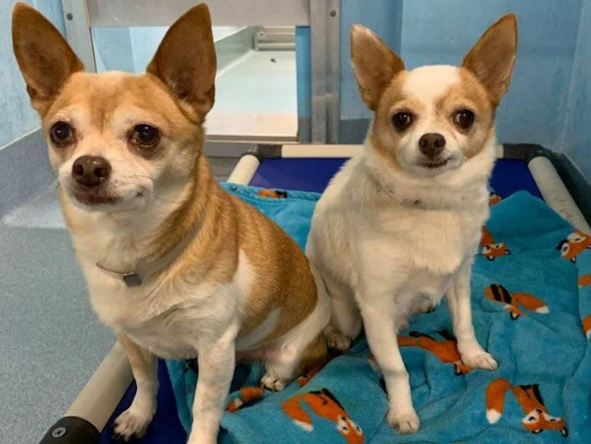 Bonded friends surrendered by owner – two months later, they wait to be saved
