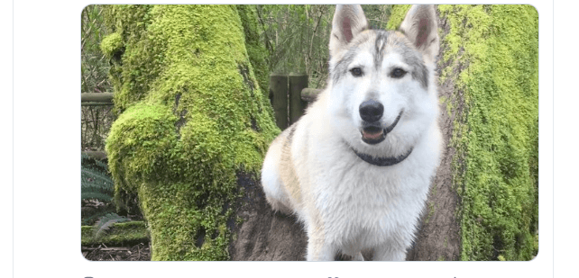 Hunter fined and temporarily banned from hunting after killing therapy dog