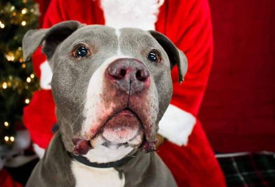 Dying dog has one Christmas wish – a fospice home where he will be loved
