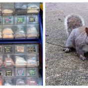 Clever Bandit Squirrels Trick Nut Seller Into Giving Them Free Nuts